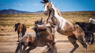 Horses on Donald Cerrone's ranch.
